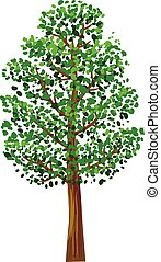 Slim tree with green leaves vector