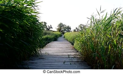 Slim young woman walks on wooden bridge in summer