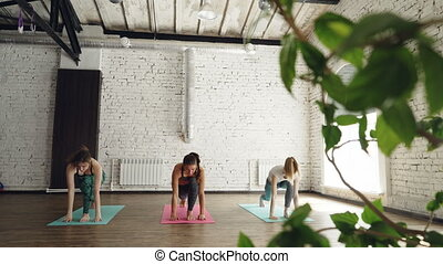 Slim young women are doing sequence of yoga asanas in nice...