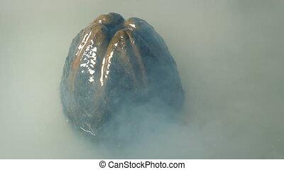 Slimy Alien Egg In Misty Swamp - Slimy egg pod sticks out of...
