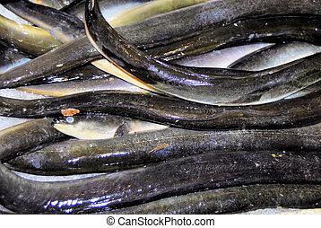 eel fish - slimy eel fish that is snakelike