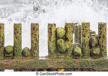 Slimy green algae covering rocks on a rusty beach groyne in...