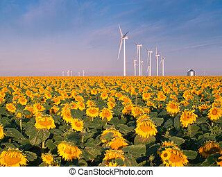 slingra turbiner, och, solrosor