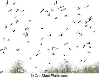 sloken, vlucht, vogels