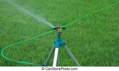 Slomo head of garden sprinkler working copy space on grass -...