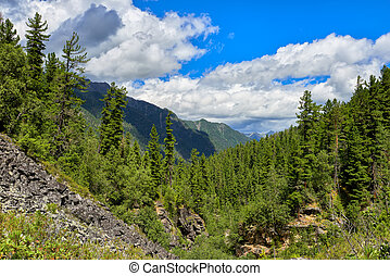 Slopes of dark coniferous taiga in July