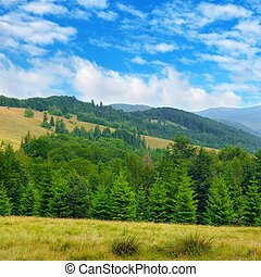 Slopes of mountains, coniferous trees and clouds in the sky.