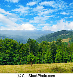 Slopes of mountains, coniferous trees and clouds in the sky. Picturesque and gorgeous scene.