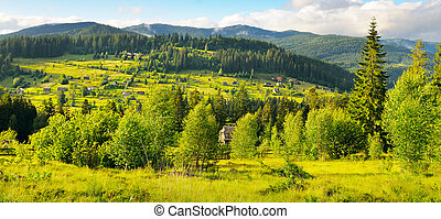 Slopes of mountains, coniferous trees and clouds in the sky. Wide photo .