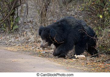 Slot bear walking in bush.