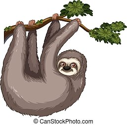 Sloth - Illustration of a sloth hanging on a branch
