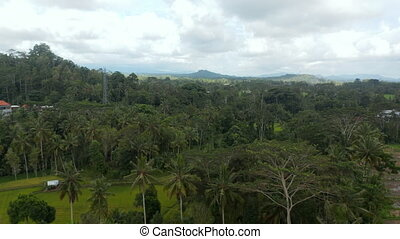 Slow aerial dolly shot of a dense tropical jungle with palm trees at the end of the rural farm fields in Bali
