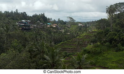 Slow aerial dolly shot of small rural village and terraced paddy field farms on the side of the mountain in a thick rainforest in Bali, Indonesia