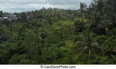 Slow aerial dolly shot through the jungle with beautiful sunny terraced paddy fields surrounded by lush thick vegetation and a small rural village on the hill in Bali, Indonesia