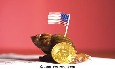 Slow big snail with USA flag and crypto coin of Bitcoin...