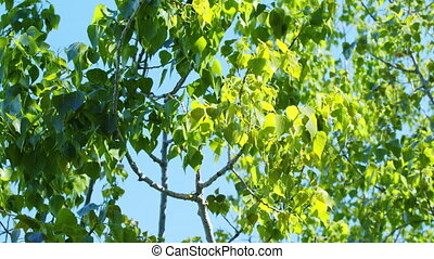 bright green leaves against a blue sky