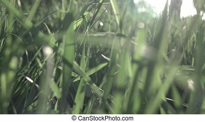 Slow flight of the camera through the green grass. Full HD video, 240fps, 1080p. Dolly-in video