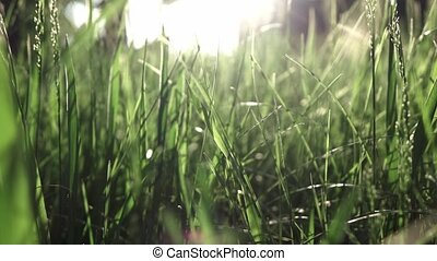 Slow flight of the camera through the green grass in the sunny day. Full HD panoramic video, 240fps, 1080p.