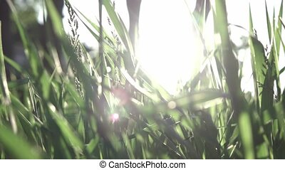 Slow flight of the camera through the green grass in the sunny day. Full HD tiltl up video, 240fps, 1080p.