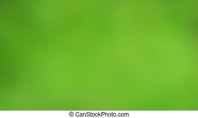 Slow Focus Reveals Sphagnum Moss Colony in Closeup - ...