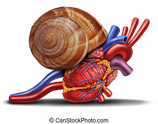 Slow Heart - Slow heart rate concept as a snail shell on ...