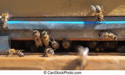 slow lifestyle motion video apiary. a swarm of bees flies...