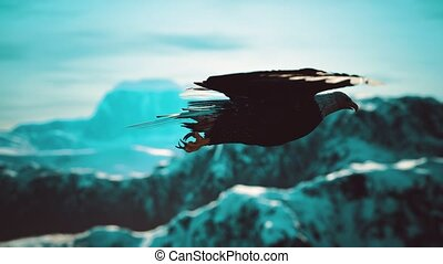 slow motion american bald eagle in flight over alaskan mountains