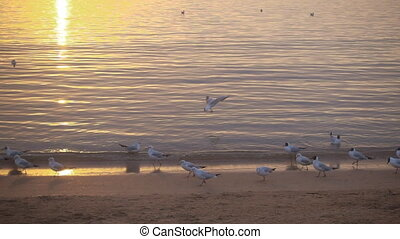 Slow motion, bird lands on the water. - Slow motion,...