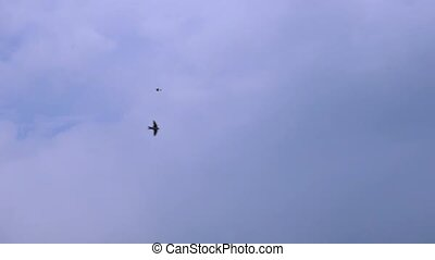 Slow motion Black Dark Birds Flying On The Blue And White Sky Background. Swallows flying in blue sky. Immigration animal in nature environment. Tranquil background nature scene. Concept of freedom and wildlife.