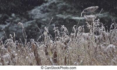 Slow Motion Falling Snow Dead Grass
