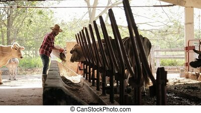 Slow Motion Farmer Peasant Man At Work In Farm