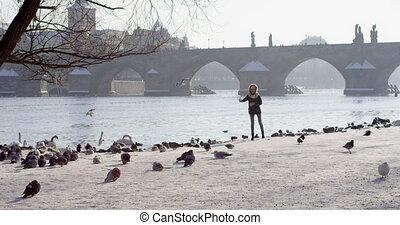 Slow motion feeding birds Charles bridge over Vltava river in capital of Czechia, Prague