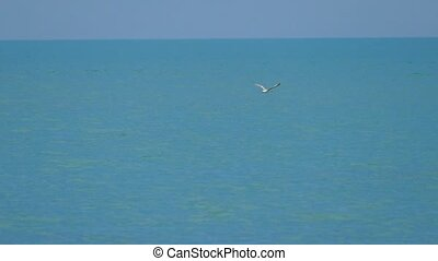 Slow motion, flying seagull on a background of blue sky