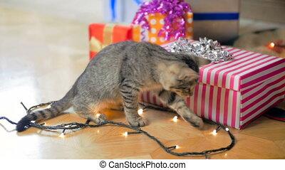Slow motion footage of cute grey kitten walking between...