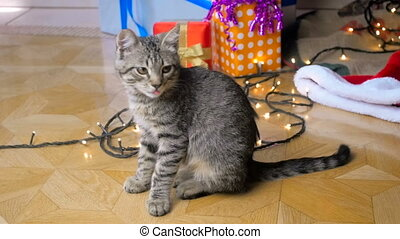Slow motion footage of cute little kitten sitting under Christmas tree at living room