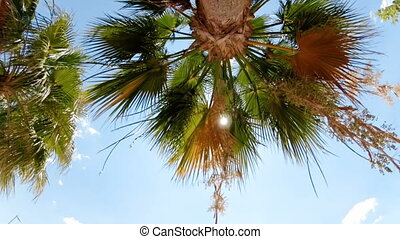 Slow motion footage of palm leaves moving on windy sunny day...