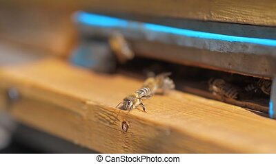 slow motion lifestyle video apiary. a swarm of bees flies...
