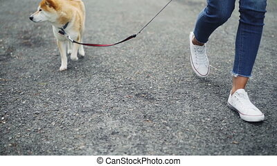 Slow motion low shot of female dog owner walking her cute...