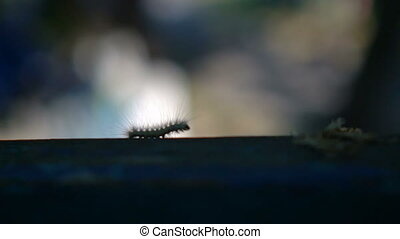 Slow Motion : Macro furry caterpillar walking on the hand and green blur background