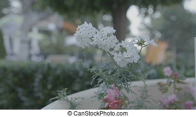 Slow motion of beautiful white flowers in the wind