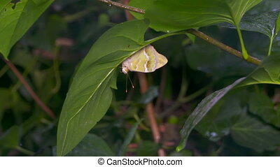 Slow motion of butterfly sheltering from the rain under a...