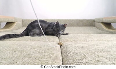 Slow motion of cute domestic cat playing with toy mouse