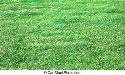 Slow motion of grass, windy day - Background of grass in a...