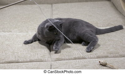Slow motion of playful young cat playing with mouse toy on a string