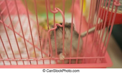 small hamster in cage - slow motion of small hamster in...