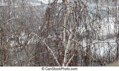Slow motion of snow falling on background of birch
