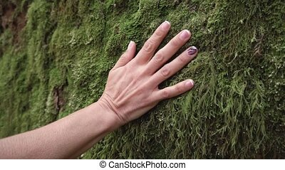 Slow motion of woman hand touching softly the moss on the...