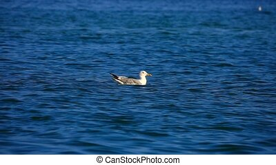 slow motion seagull on the water