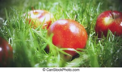 Slow motion shot of red apple falling on the grass - Red...