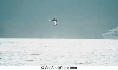 Slow motion shot of sea gull flying over moored boats